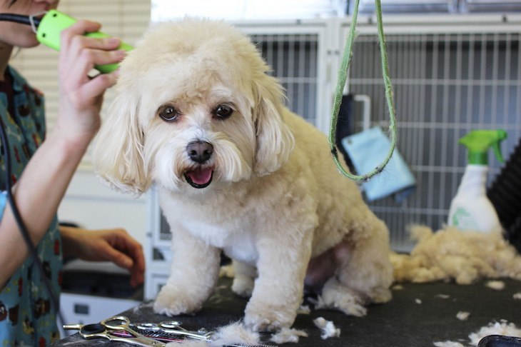How to give your dog a haircut