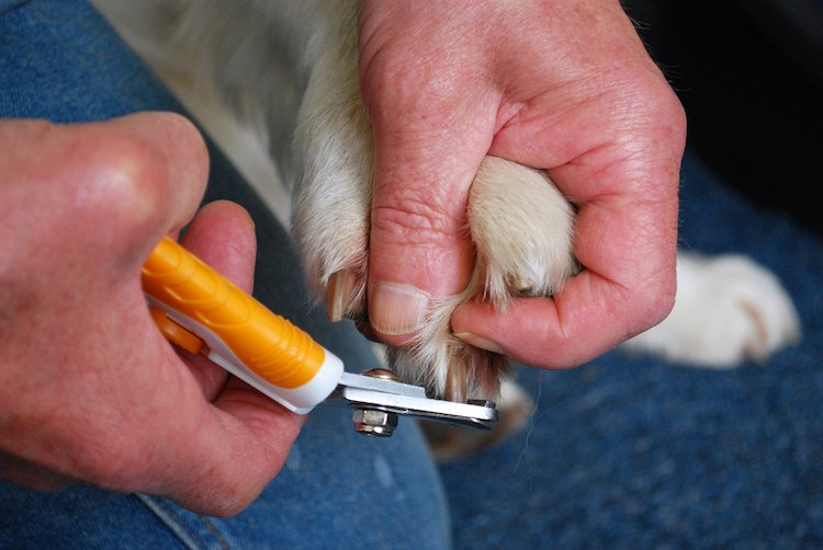 Best Dog Nail Clippers Amp Reviews Updated List For 2019