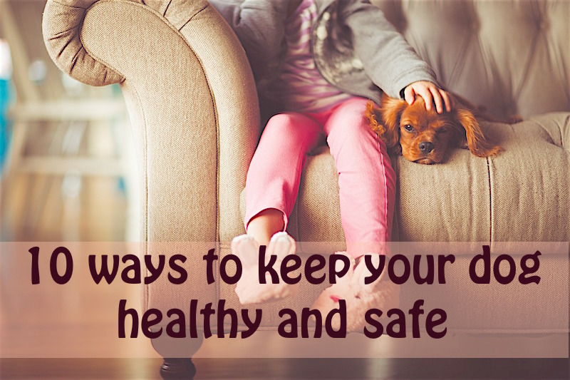 keep your dog healthy and safe