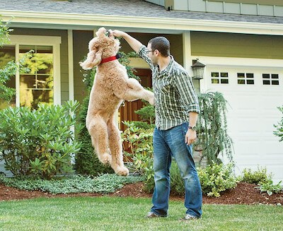 how to choose a electric dog fence